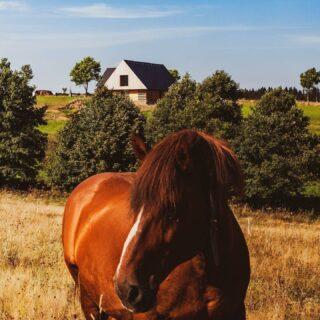 Kolem naši chalupy jsou zvířátka všude kolem. Kromě koně a kraviček je zde běžné natrefit na jeleleny pro které je toto území v okolních lesích domovem😉 . . . . . #ubytovani #rent #booking #hory #horyacestovani #chalupa #ubytovaninahorach #lyzovani #bezky #rozhledny #houbareni #horskakola #vylety #priroda #orlickehory #cechy